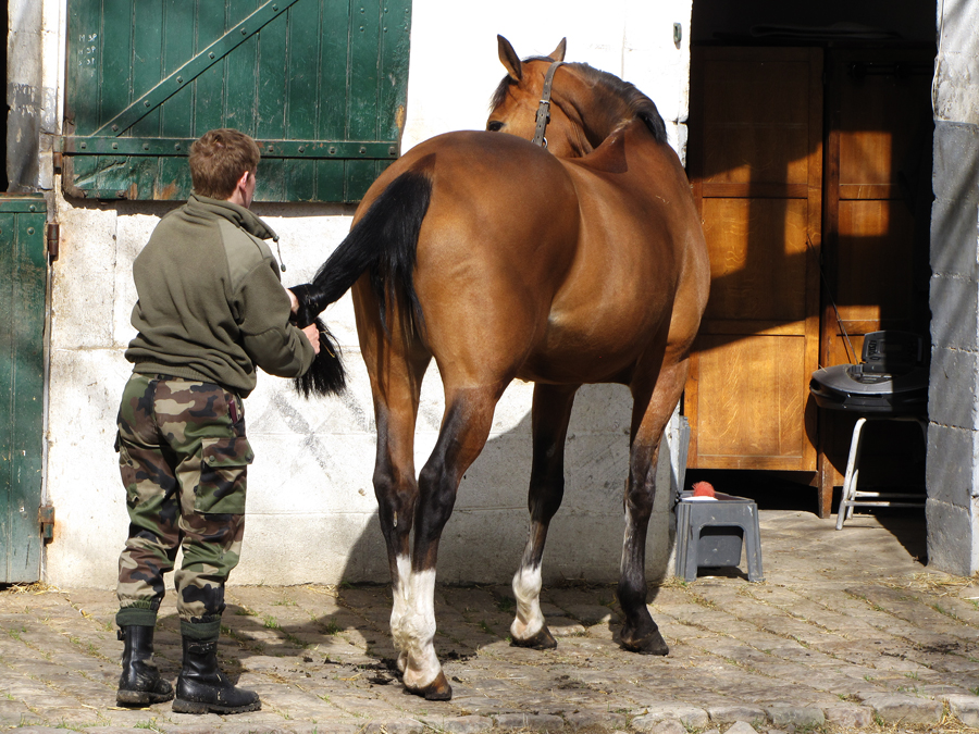 An officer grooming his mount.